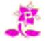 Mes Jolies Sirènes Star Blossom symbol