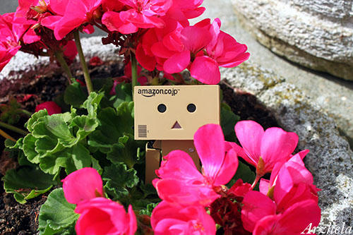 Danbo mini flower