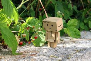 Danbo mini strawberry